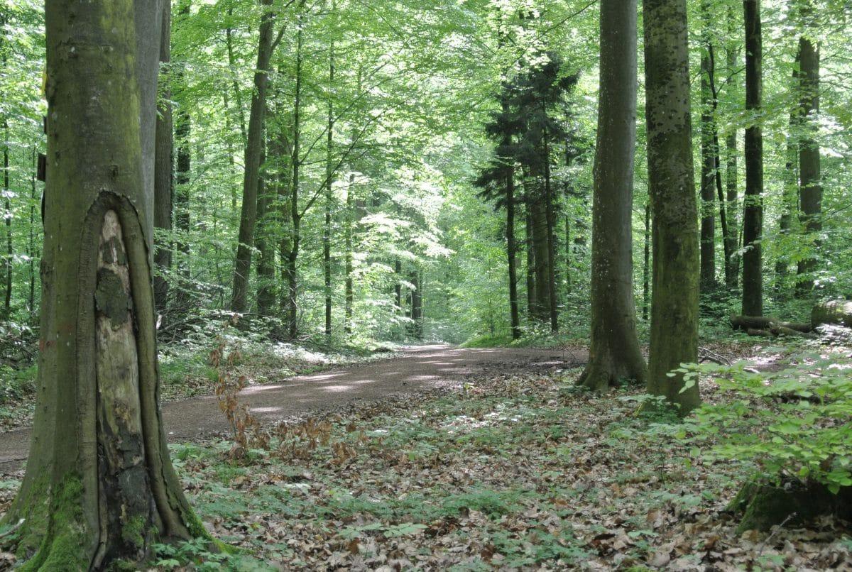 im Eichwald